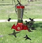 Yes - another picture of hummingbirds!